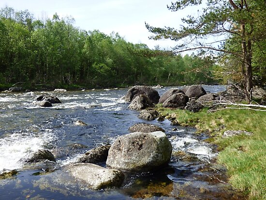 River, rocks and trees by dees-photos