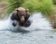 Look Out, Salmon! by Linda Sparks