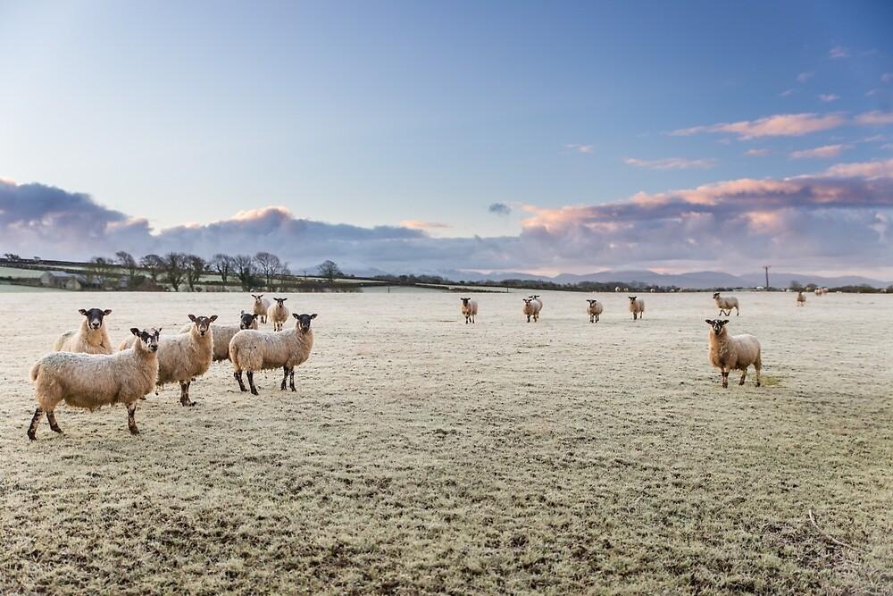 what ewe looking at  by Mike Hulme