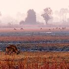 Kafue misty morning by Linda Sparks