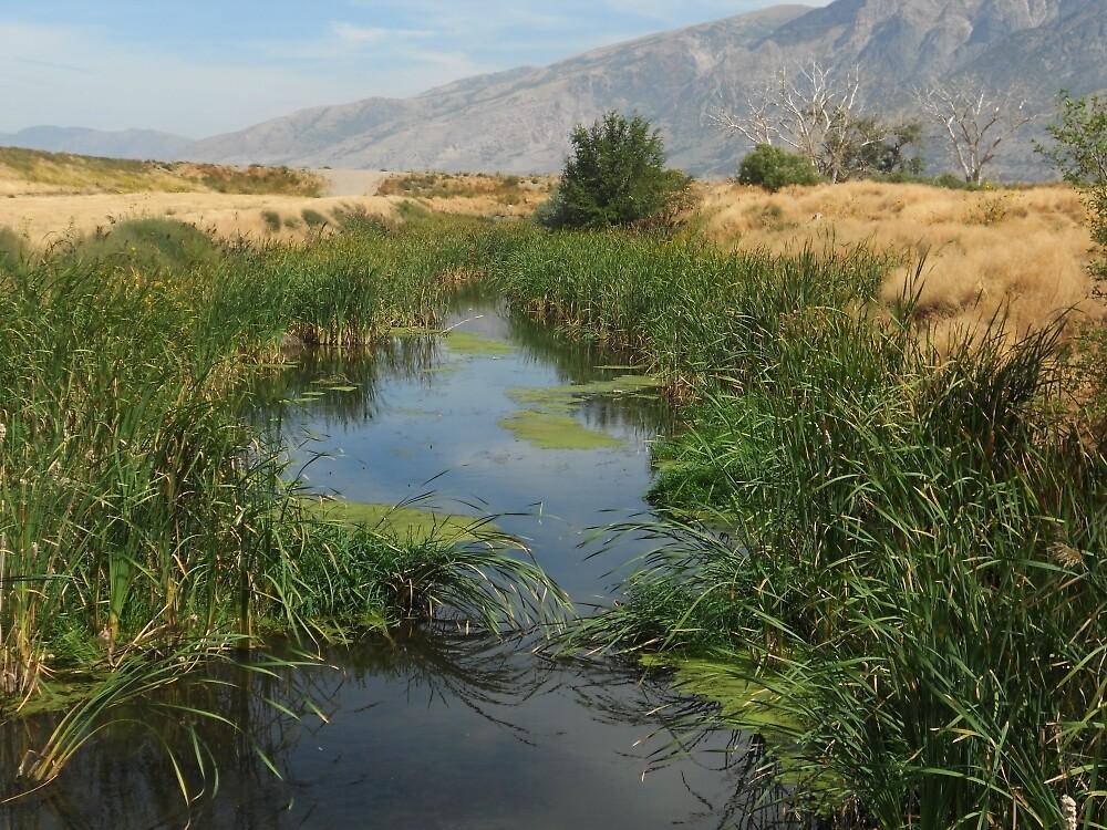 Reeding River by razzyfox