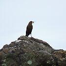 Bird on a Rock by godtomanydevils