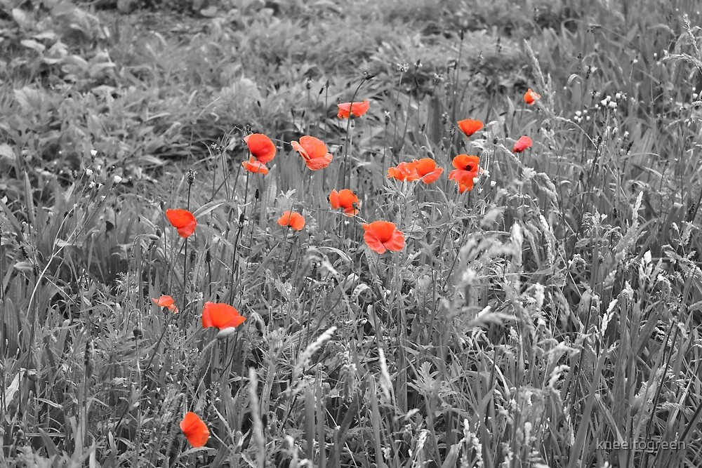 Red Poppies by kneeltogreen