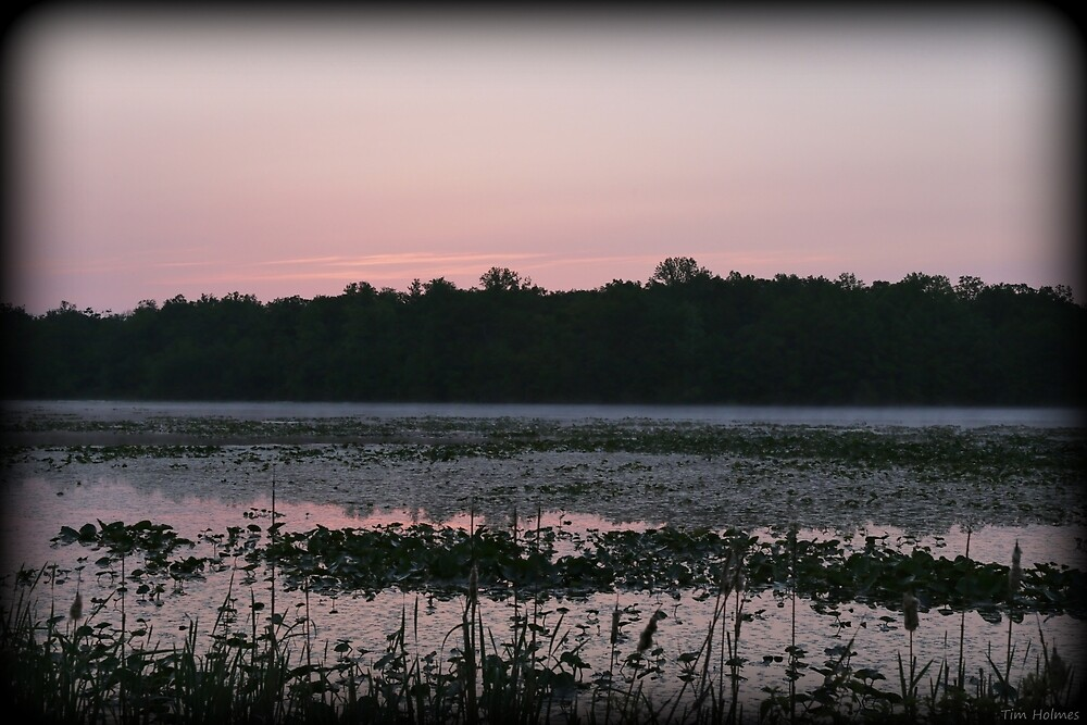 Morning Pink by Tim Holmes