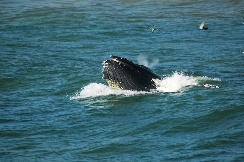 Humpback Whale Blowhole by 4ayesha