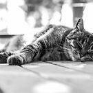 Relaxing on the Verandah by Danielle Espin