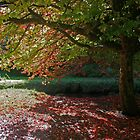 Autumn Colour, Bournemouth Gardens by RedHillDigital