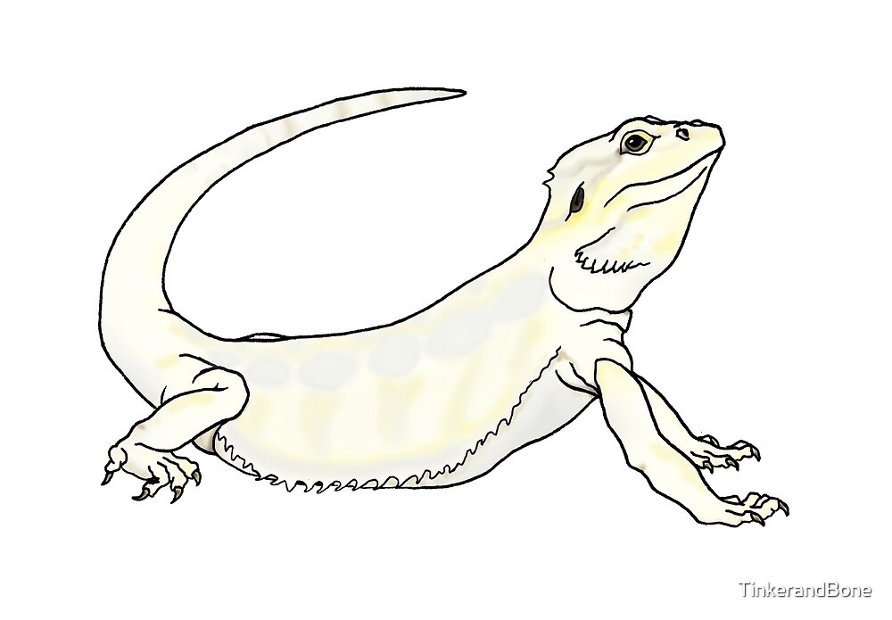 Leucistic Bearded Dragon by TinkerandBone