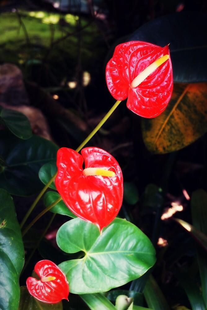 Fiery Red by Marisa Palacios