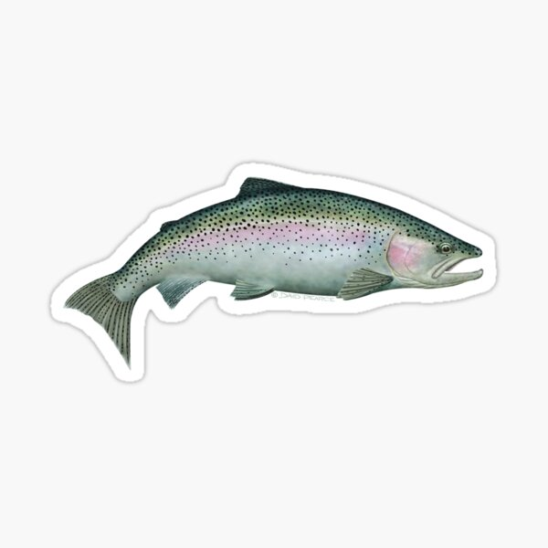 Rainbow Trout Sticker