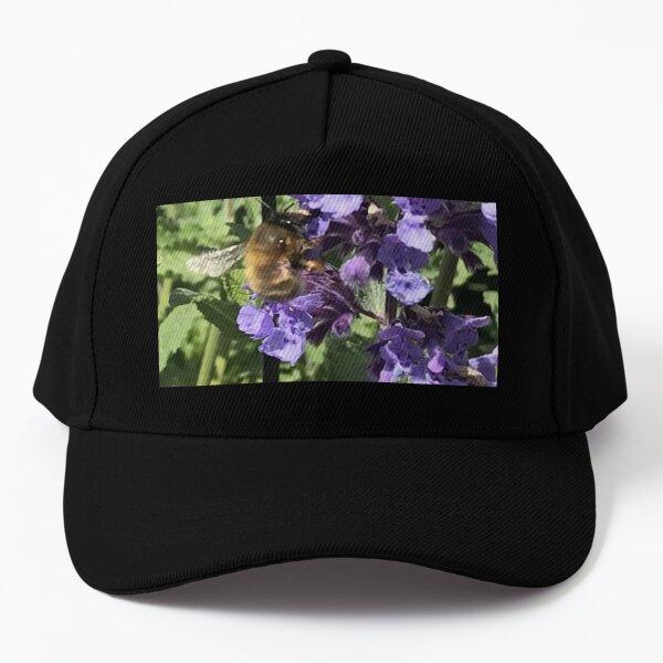 Bee loving purple flowers Baseball Cap