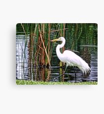 Expert Fisherman Canvas Print