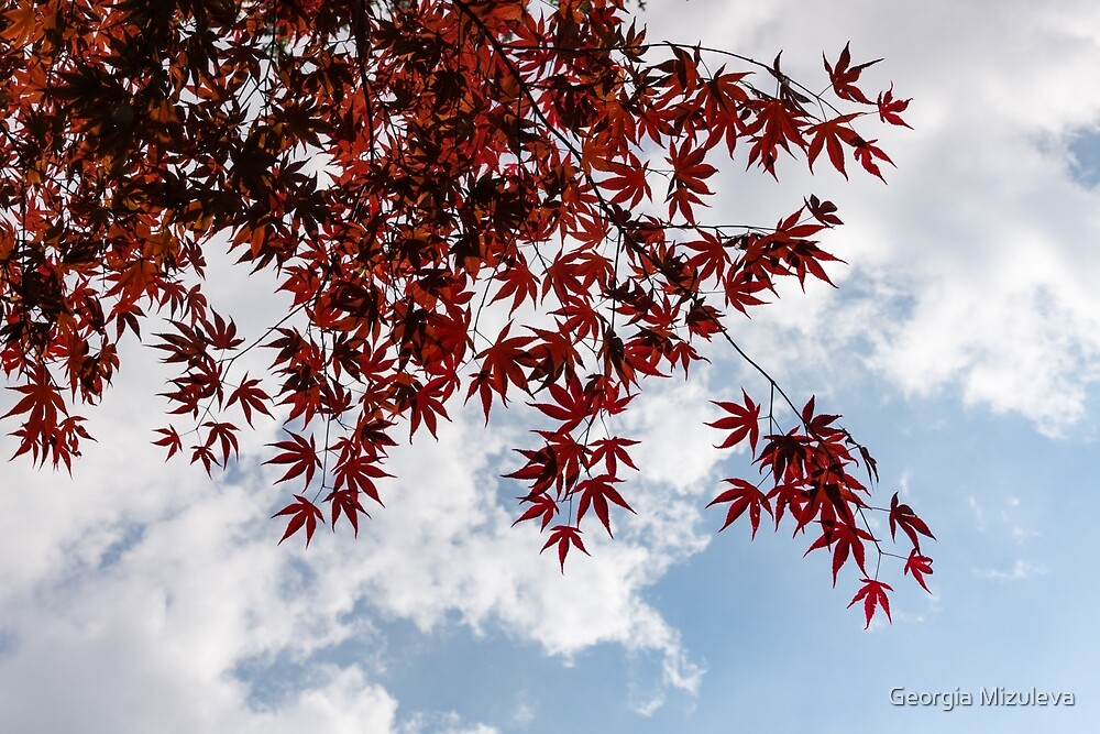 Japanese Maple Red Lace - Horizontal View Downwards Right by Georgia Mizuleva
