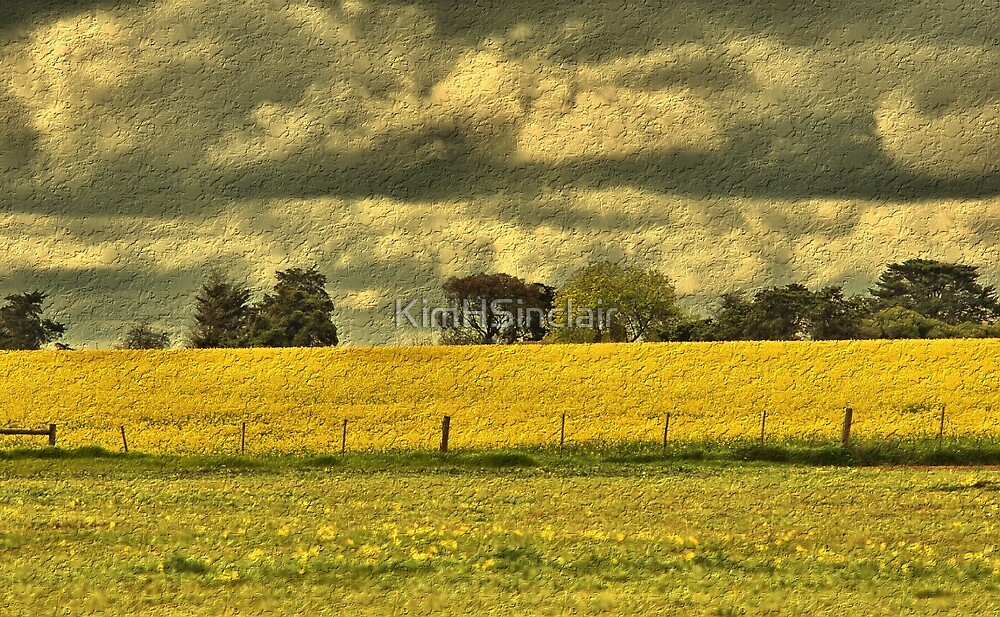 Storm clouds over gold field by KimHSinclair