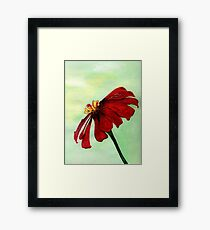 A Red Flower in Sharona's Dreams Framed Print