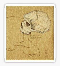Archaic Homo sapiens Sticker