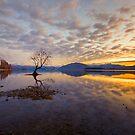 New Zealand Landscapes by Linda Cutche