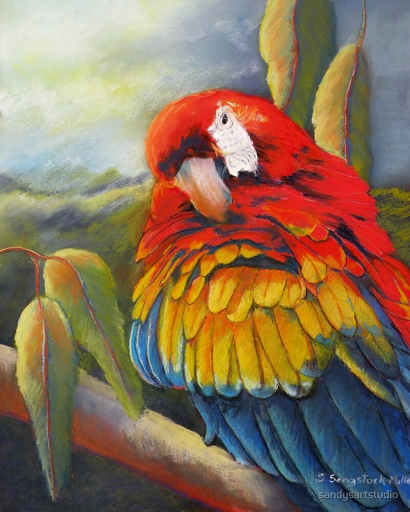 Fluffing a plumb  (Macaw) by sandysartstudio