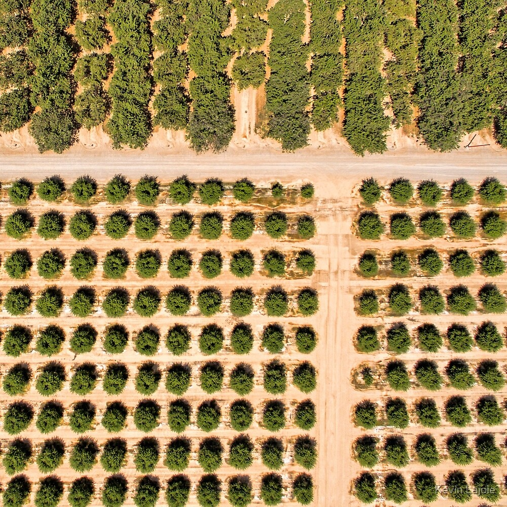 Almond crops by Kevin Lajoie