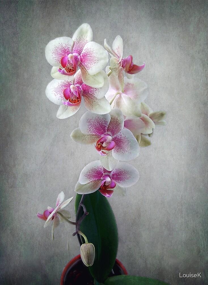 Fancy Orchids by LouiseK