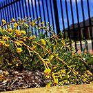 Yellow Plant by SenpaiAden