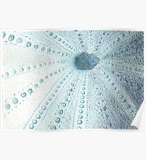Sea urchin etching in blue Poster