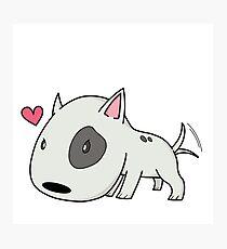 Cutie Bull Terrier Photographic Print