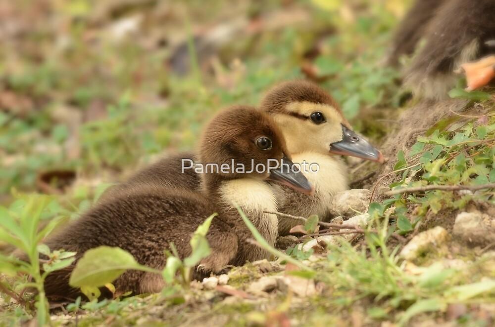 Ducklings at Lake Iola - Scottsburg, IN by PamelaJoPhoto