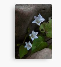 Three Stars Canvas Print