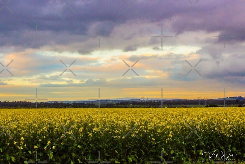 Sunset over Canola Fields, Sunbury, Victoria, Australia by VickiWalsh