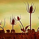 thistles by lastgasp