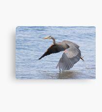 Great Blue Heron Launch Metal Print