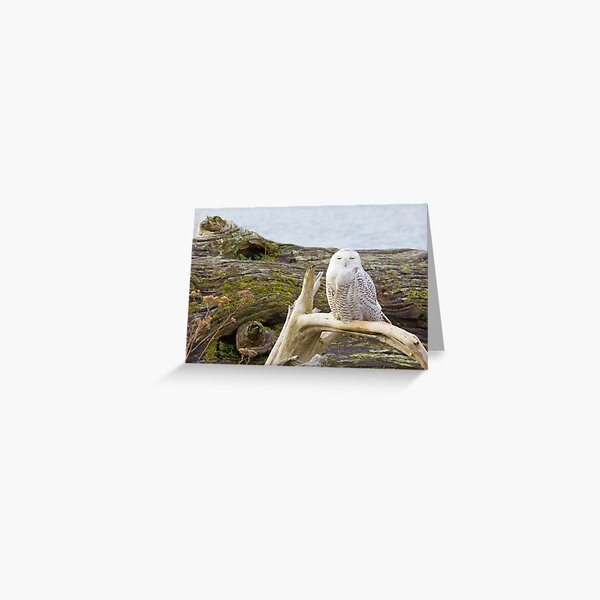 Snowy Owl Squint Greeting Card