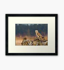 Short-eared Owl in Evening Light Framed Print