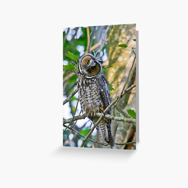 Curious Juvenile Long-eared Owl Greeting Card