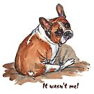 Winston - It wasn't me! by Maureen Whittaker