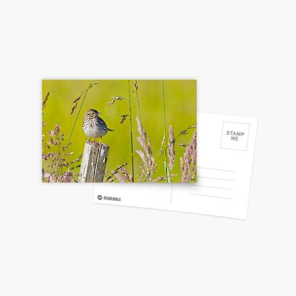 Savannah Sparrow on a Post Postcard