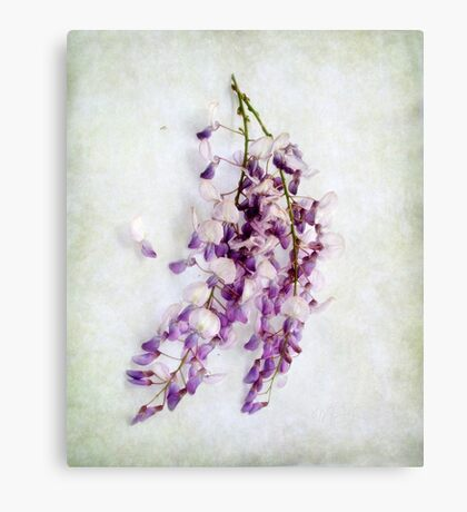 Wisteria  Still Life Canvas Print