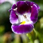Wishbone Flower by Kasia-D