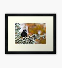 Fall Forage Framed Print