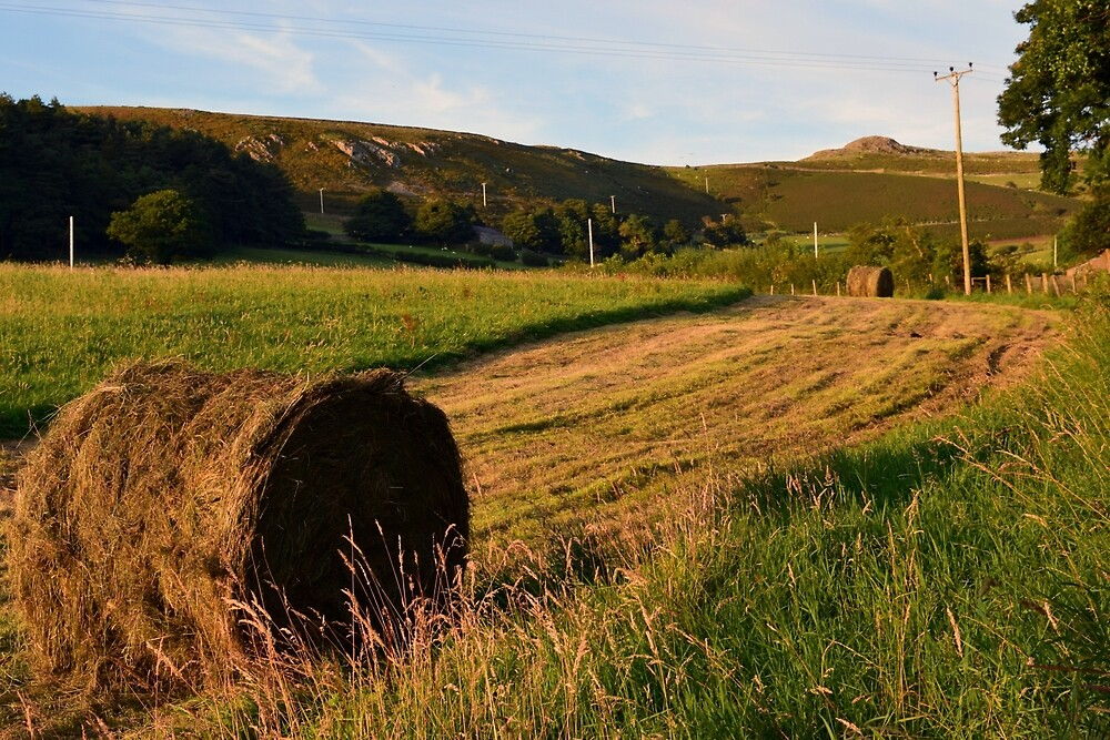 Making Hay While The Sun Shines. by Michael Haslam