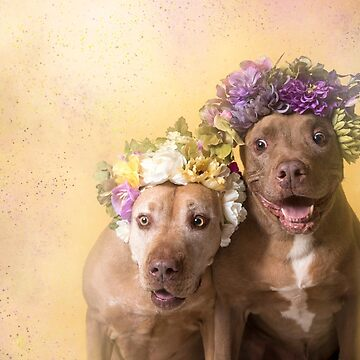 Flower Power, Indie and Choco by SophieGamand