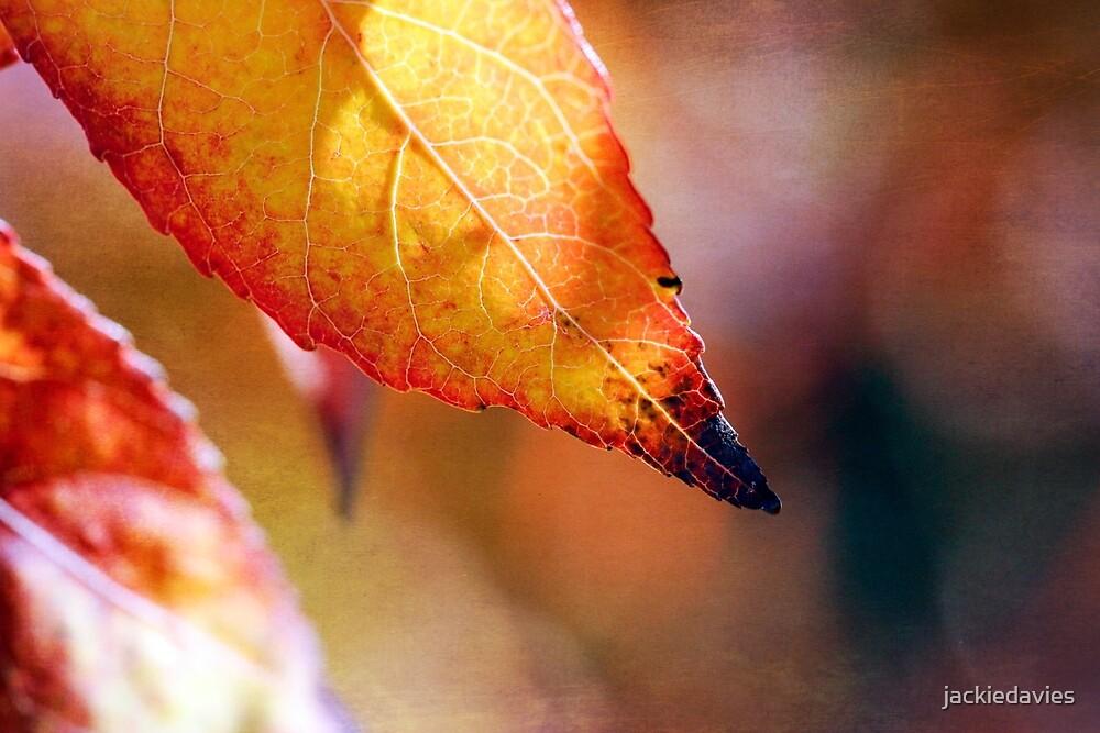 Autumn Leaf by jackiedavies