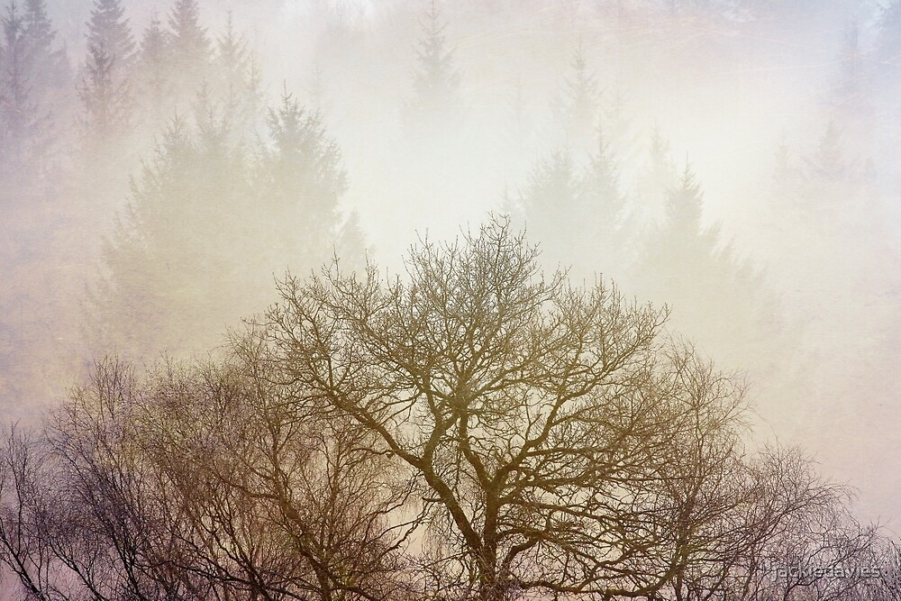 Misty Trees by jackiedavies