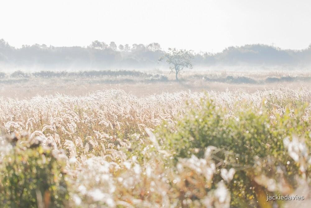 Misty Morning  by jackiedavies
