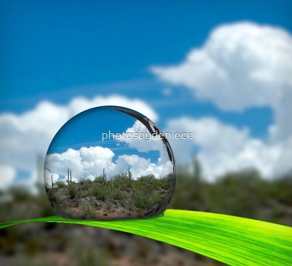 Cactus In A Dew Drop by photosbydeniece