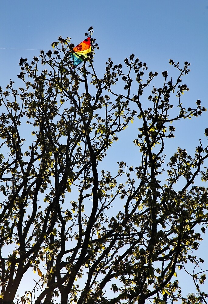 resting place for many kites. by geof