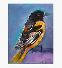 Oriole Photographic Print