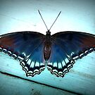 Red-spotted Purple Butterfly by Jean Gregory  Evans