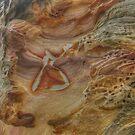 Bondi Rock Star by Michael Matthews